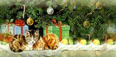 Funny cats: Christmas kittens