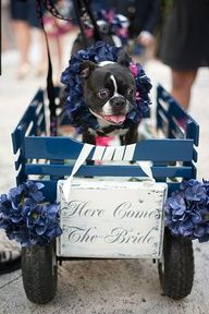 Except with the grooms nephew pulling a red radio flyer with our puppy, the sign around his neck. Cute!