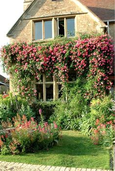 Jardim com roseiras trepadeiras. O jardim está maravilhoso!