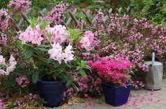 Massifs, mises en scènes fleuries : voici 20 propositions à intaller au jardin - F. Marre - Rustica - Globe Planter
