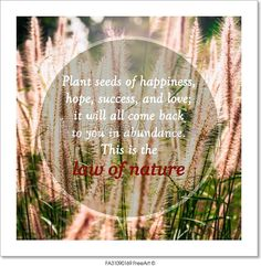 """Meaningful quotes on grass flowers in meadow under sunlight, Plant seeds of happiness, hope, success, and love; it will all come back to you in abundance. This is the law of nature."" - Art Print from FreeArt.com"