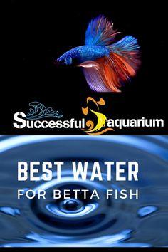 Betta Fish, Aquarium Fish, Survival, Success, Water, Movies, Gripe Water, Films, Movie