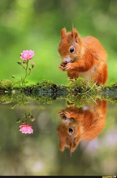 #nature, #animals, #photography, #squirrel