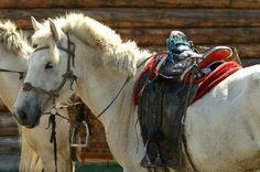 Reisen mit dem Pferd - Extratours-Mongolei
