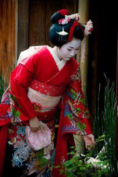 See a Geisha or Maiko in Kyoto Geisha Japan, Geisha Art, Japanese Beauty, Japanese Girl, Japanese Things, Japanese Fashion, Kyoto, Afrique Art, Creation Art