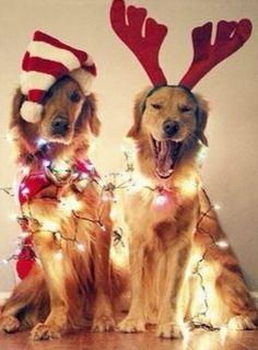 #Perros #Gatos #Conejos y 22 #mascotas con disfraces de #Navidad, ¡los amarás!