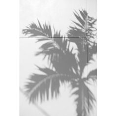 Perfect Palm Trees Tumblr Black And White Liked On Polyvore In Design Decorating
