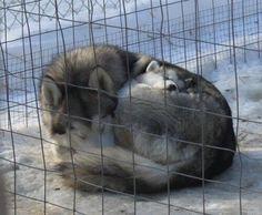 Cuddling in winter