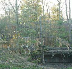 Gaja zoo