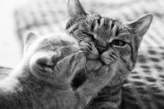kissoja hankkisin