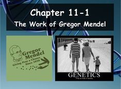 Biology genetics 112 applying mendels principles ppt and guided biology 11 1 the work of gregor mendel ppt and guided notes fandeluxe Images