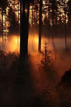 The natural lighting in this picture of a forest is very soft. The beams of sunlight shining through the fog between the trees creates a mysterious environment, but the light is extremely warm so the space is not intimidating, in fact, it is rather welcoming and inspirational.