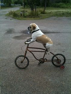 Canines love bikes too. #bike #cycling #dogs