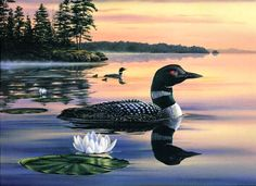 Sunset Loon