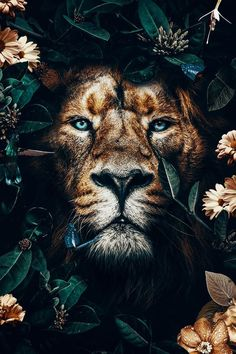 Beautiful golden lion in the jungle surrounded by golden and orange flowers, lovely butterflies and a sunflower. This male lion poster is great as an artprint for decoration in your home. Lion Images, Lion Pictures, Nature Pictures, Tier Wallpaper, Animal Wallpaper, Galaxy Wallpaper, Photo Wallpaper, Rose Wallpaper, Animals And Pets