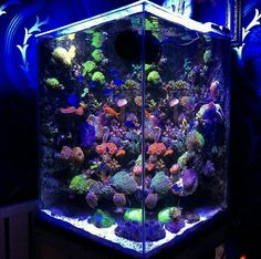 . Saltwater Aquarium Setup, Marine Aquarium Fish, Coral Reef Aquarium, Aquarium Ideas, Aquarium Design, Saltwater Tank, Reef Tanks, Fish Tanks, Amazing Aquariums