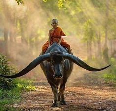 """Dhamma sawatdee""  Photo via @henrybrighton. . Welcome to @architectureoskar (400K) ! Your daily inspiration  Tag a Friend ! . #thailand #dhamma #bull #monk"
