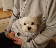 dog hoodie