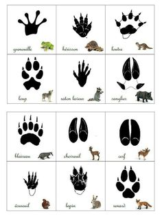 Empreintes animaux de la forêt animals silly animals animal mashups animal printables majestic animals animals and pets funny hilarious animal Montessori Activities, Activities For Kids, Shiro Anime, Animals Tattoo, Animal Footprints, Animal Tracks, Forest School, Forest Animals, Animals And Pets