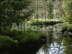 A Stream Wanders Through a Lush Taiga Forest by Pacifica Island Art Landscapes Photographic Print - 41 x 30 cm
