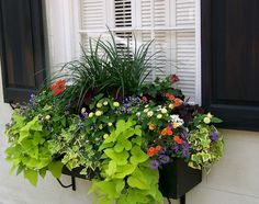 Window Boxes Ideas For Sun. Window boxes can be made from metals, wood or perhaps from solid vinyl or PVC types materials. Each of these has its own distinct features that could create a whole new ambiance to the place where it is being set up. Fall Window Boxes, Window Box Flowers, Window Planter Boxes, Planter Ideas, Fall Flower Boxes, Window Ideas, Flower Ideas, Container Flowers, Container Plants