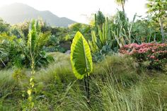 golden-rock-inn-garden-nevis-marsden-raymond-jungles-gardenista