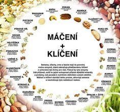 Klíčení semínek a luštěnin (čočky, munga, adzuki a slunečnice) - Bylinkovo. Sushi, Food And Drink, Cooking, Diy, Gardening, Bonsai, Upholstery, Blog, Recipes