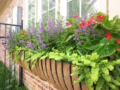 List of planting combos for pots and baskets   Part sun: Angelonia (purple) Dragonwing Begonias Creeping Jenny or Sedum