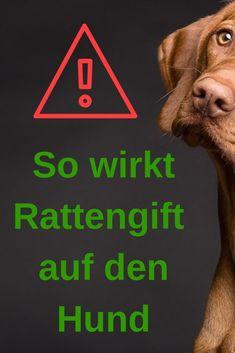 wann wirkt rattengift bei hunden