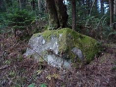 rocks in forest - Google Search