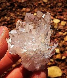 Arkansas Quartz Crystal Point Cluster.  Jessieville Arkansas is the place for some great finds!