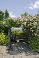 The Best Vines for a Wood Pergola thumbnail