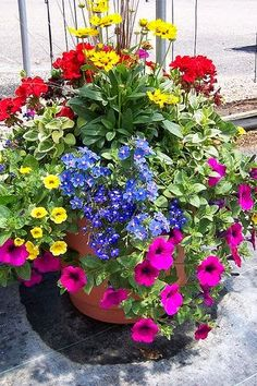 This is just like the ones my Dad used to make!  --Judy's Cottage Garden: Container Gardens