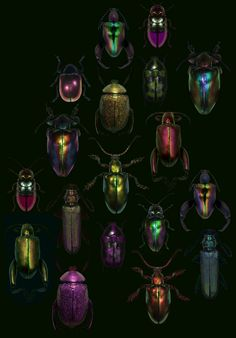 beetles-I thot it was Christmas ornaments??? It's bugs...GROSS...but they are pretty...as long as they r NOT on me... :)