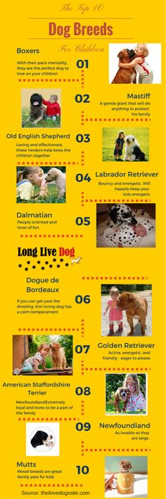 Infographic: The top 10 dog breeds for your children http://www.longlivedog.com/10-top-breeds-for-children/ #LongLiveDog