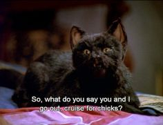 Salem The Cat - Sabrina Teenage Witch