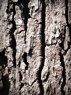 New free stock photo of wood dry texture