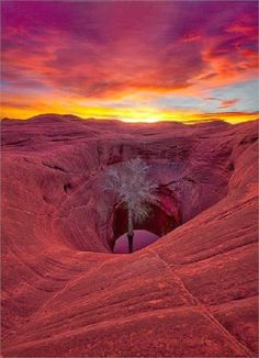 World's Snaps: Sandstone Lone Cottonwood Sunrise