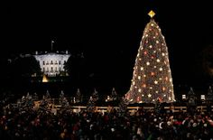 Don't Miss the Lottery for the National Christmas Tree Lighting!: National Christmas Tree