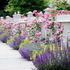 Flowers in front and through a white picket fence. Garden Spaces - traditional - landscape - other metro - dabah landscape designs. Garden Fence, Garden Shrubs, Outdoor Gardens, Beautiful Gardens, Fence Landscaping, Garden Design, Cottage Garden, Plants, Dream Garden