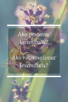 Levanduľa lekárska nielenže vyzerá veľmi pekne a vďaka svojim krásnym fialovým kvetom je ozdobou v interiéri aj exteriéri, ale je aj veľmi užitočná. http://skvelydomov.eu/levandula-pestovanie-ako-pestovat-levandulu-rozmnozovanie-levandule/