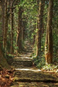 And Kumano Kodo Trail, Ancient Pilgrimage Routes, Wakayama Image Nature, Wakayama, Forest Path, Photos Voyages, Walk In The Woods, Walking In Nature, Pilgrimage, Japan Travel, Amazing Nature