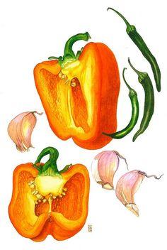 I like botanical drawings - Picmia