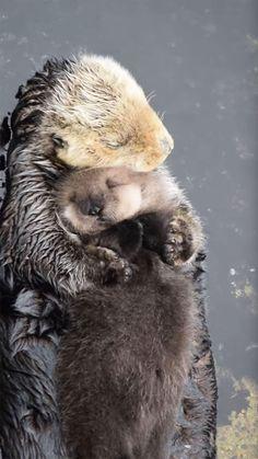 Mommy Otter Hugging Her Baby