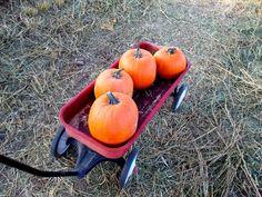 Central Oregon Pumpkin Patches - 2020 | Fred Real Estate Local Pumpkin Patch, Pumpkin Patches, Hay Maze, Oregon Falls, Corn Maize, Harvest Market, Rock Ranch, Pony Rides, Central Oregon