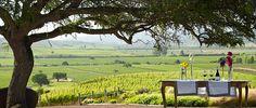 Casas Del Bosque, Chile - was a lovely vineyard