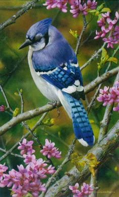 Carl Brenders - Flash of Sapphire - Blue Jay - LIMITED EDITION PRINT from the Greenwich Workshop Fine Art Gallery featuring fine art prints, canvases, books, porcelains and gift ideas. Pretty Birds, Beautiful Birds, Animals Beautiful, Exotic Birds, Colorful Birds, Jay Azul, Vogel Gif, Blue Jay Bird, Bird Pictures