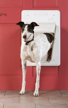 PetSafe SmartDoor Large (up to 100 lbs) Pet Supplies Near Me