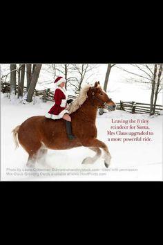 fd90771c81 17 Best draft horses images