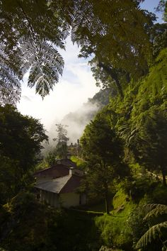 Forest in Guatemala